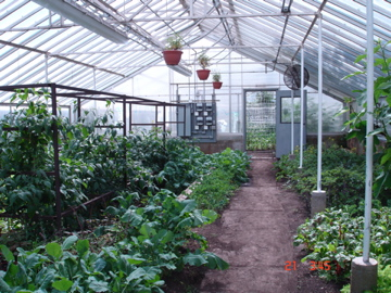 View of one of the greenhouses.